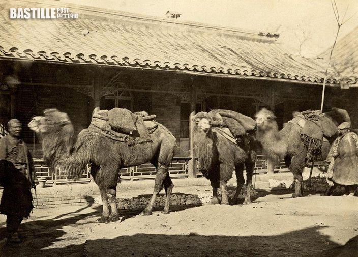 英國攝影師Thomas Child 在1870-1880年代拍攝的駱駝商隊 (網上圖片)