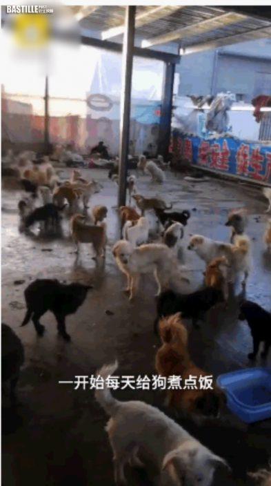 安徽流浪狗臨時收容所逾百狗隻被集體運走 去向不明