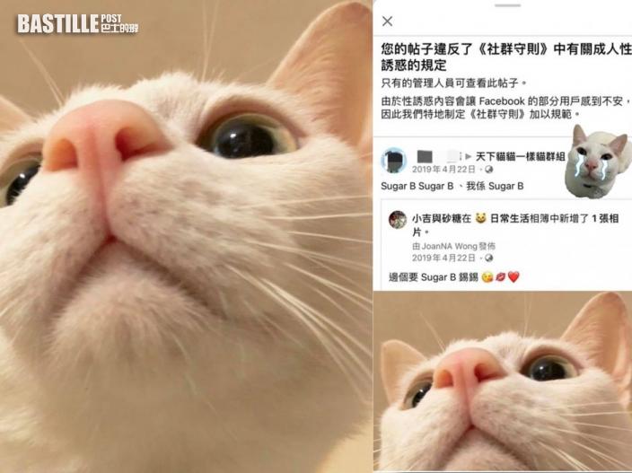 【Juicy叮】Facebook封鎖違《社群守則》帖文 貓相片被指「成人性誘惑」遭刪除