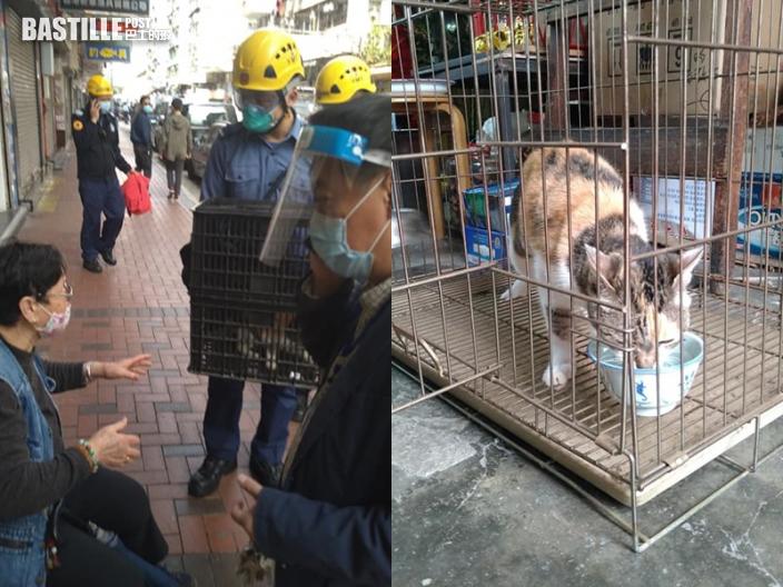 【封佐敦四街】排檔檔主憂貓隻斷水糧兩日 消防剪鎖救出25歲貓女