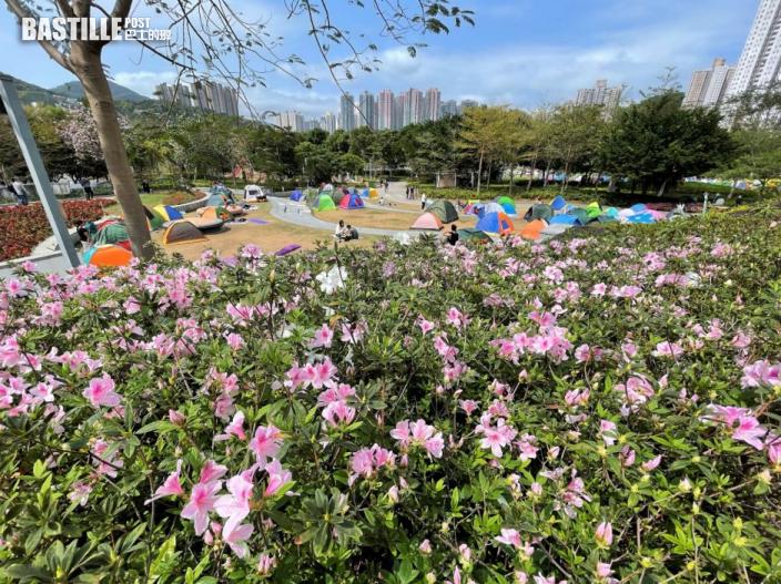 將軍澳單車館公園櫻花初綻 吸引市民到場「打卡」