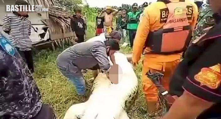 印尼8歲童7.9米長遭鱷魚生吞 父救人失敗翌日剖腹見全屍