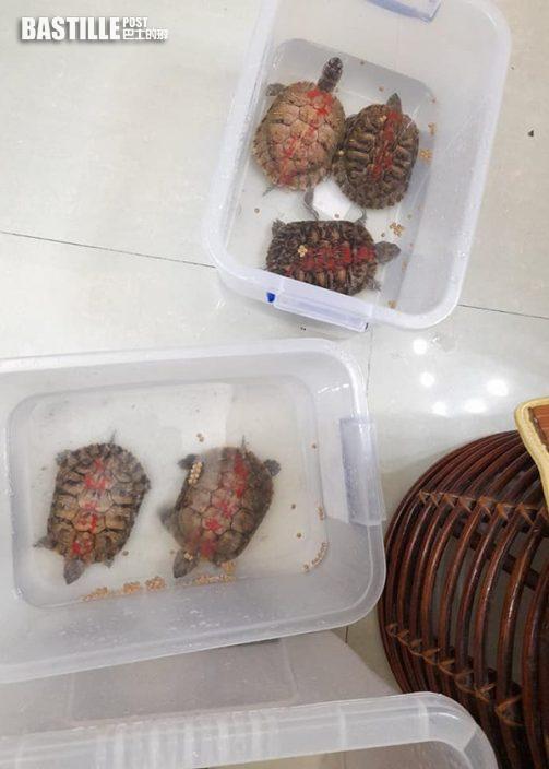【Juicy叮】復活清明長假期拯救40隻放生烏龜 棄龜關注組嘆疲於奔命