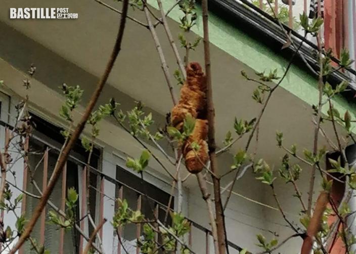 波蘭女驚見窗外「不明生物」崩潰求救 動保人員發現竟是牛角包
