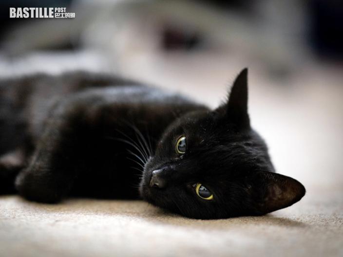 【Juicy叮】老爺探訪指黑貓「剋佢」要求送走 新抱怒斥:憑咩嘢?