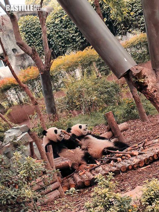 成都探訪醫院送暖順道遊覽 溫碧霞惜未能見助養熊貓仔