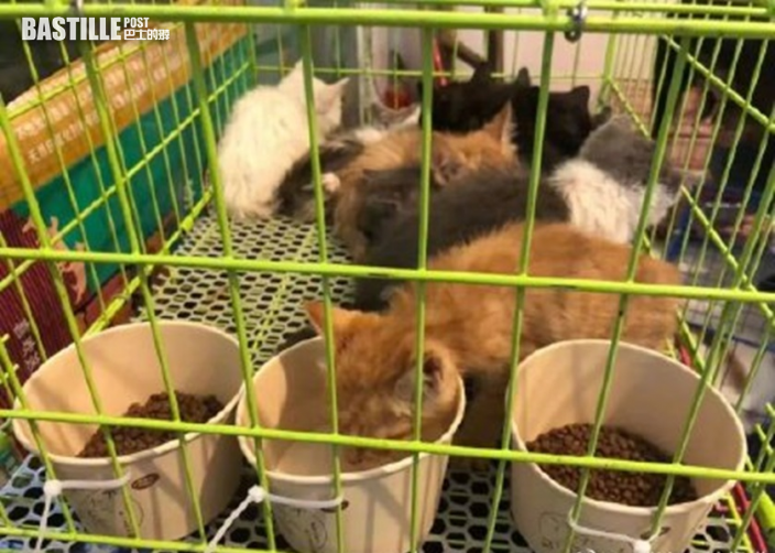 成都動保義工截獲寵物盲盒貨車 160多隻貓狗層層疊