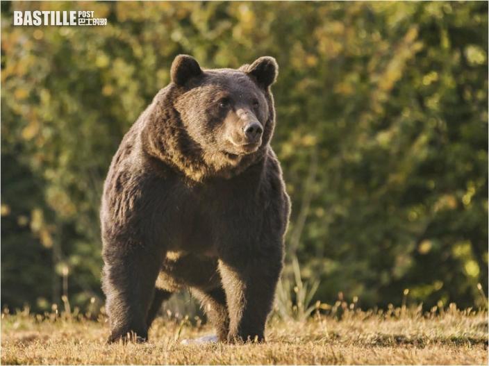 列支敦士登親王曾射殺野生棕熊 或屬歐洲體型最大