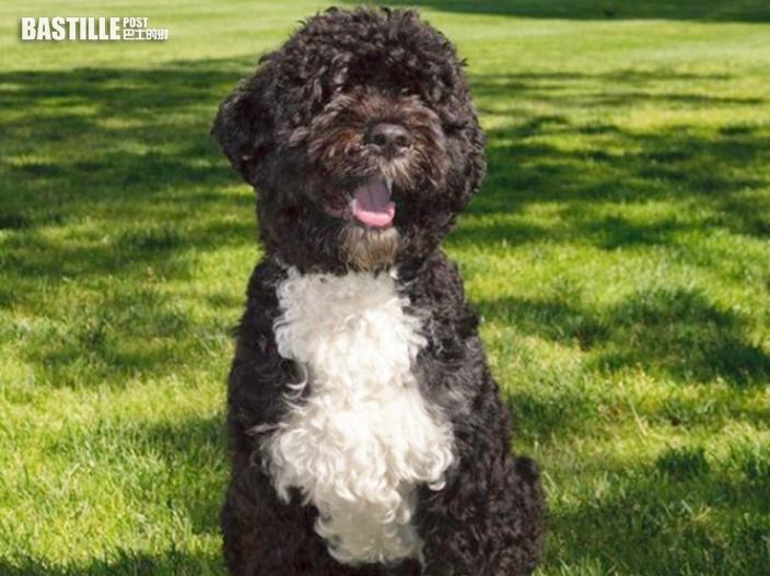 愛犬阿博不敵癌症離世 奧巴馬發文悼念:失去了一個真正朋友