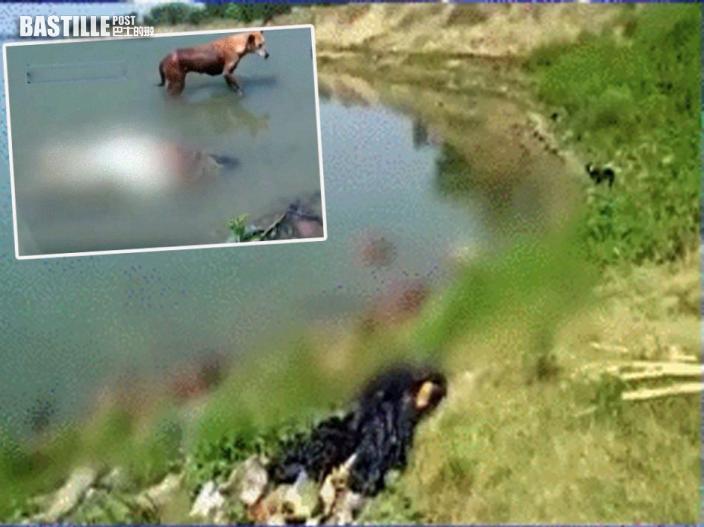印度恆河現逾百具染疫浮屍 野狗出沒恐啃食引發新疫情