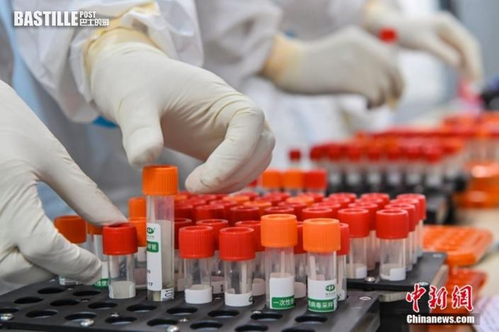 6月3日晚,廣東省廣州市廣州體育館,由廣州實驗室聯合國家呼吸醫學中心、廣州呼研院、金域醫學等單位聯合共建的四組「獵鷹號」氣膜實驗室全部啟用,四組「獵鷹號」氣膜實驗室日核酸樣本檢測產能可達12萬管。圖為工作人員在「獵鷹號」氣膜實驗室內整理待檢測的核酸樣本。 中新社記者 陳驥旻 攝