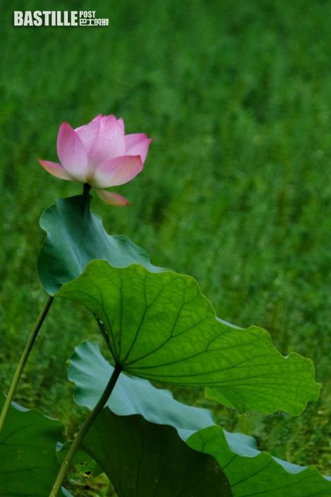 寧靜的夏,廣州的美