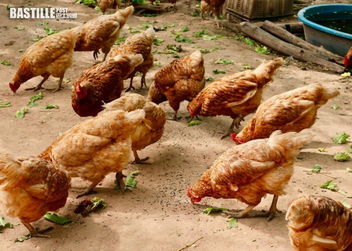 江蘇省1人感染H10N3禽流感 全球首宗人類感染病例