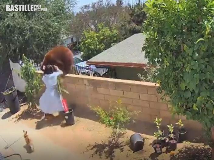 【有片】為救愛犬 17歲少女將成年棕熊推下圍牆