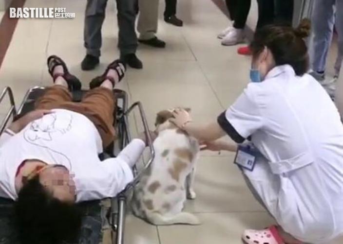 江蘇婦車禍受傷送院忠犬緊隨寸步不離 網民受感動:太有靈性
