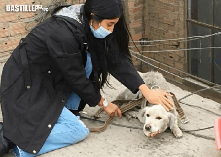 秘魯白狗被主人遺棄天台4年 獲救僅一周後去世