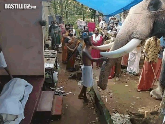25年朝夕相處難捨馴象師離世 大象耗2小時走24公里送別