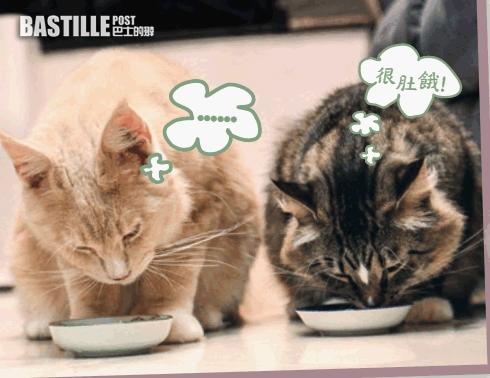 消委會:主子餵飼貓貓濕糧六大貼士