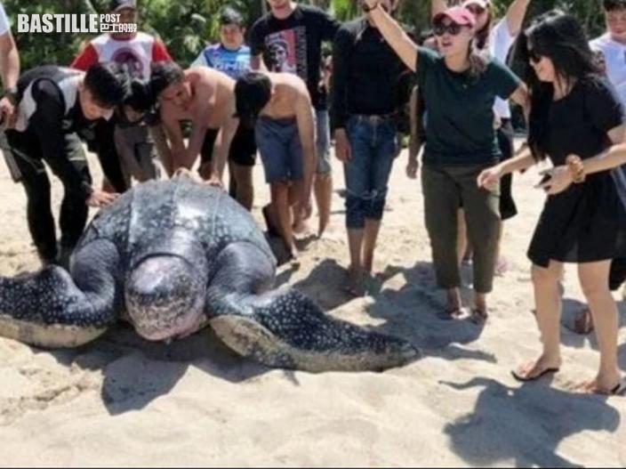 世界最巨海龜擱淺 熱心民眾撥水合力推回大海