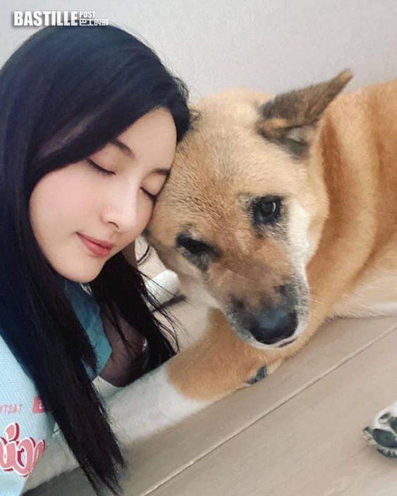 陳展鵬獲小豬比按摩慶父親節 林夏薇因10歲愛犬患癌爆喊