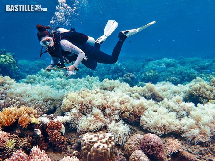 珊瑚出現急劇白化 澳洲大堡礁或降格為「瀕危世界遺產」