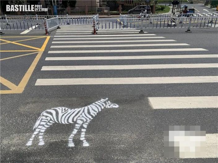 杭州斑馬線真有「斑馬」 交警:加強學童注意安全