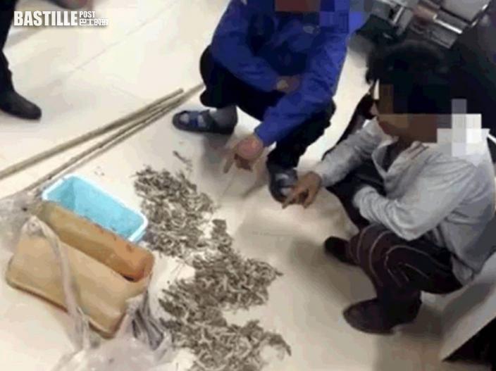 河南2男子非法獵獲490隻壁虎被捕 辯稱替母親治病