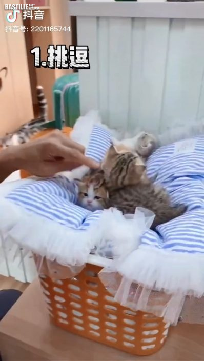 謝霆鋒化身做暖男探望貓咪 網民葡萄想做貓多過做人