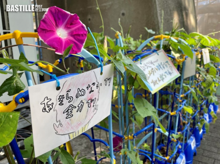 【東京奧運】日本小學生種牽牛花 傳承奧運精神
