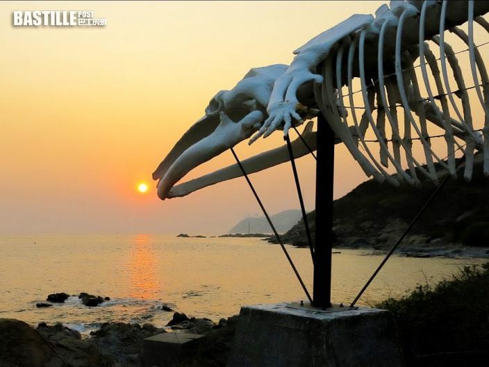 港大海洋研究所 推「港鯨重生計畫」