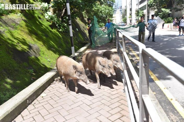 食環署檢控一名深灣道餵飼野生動物人士