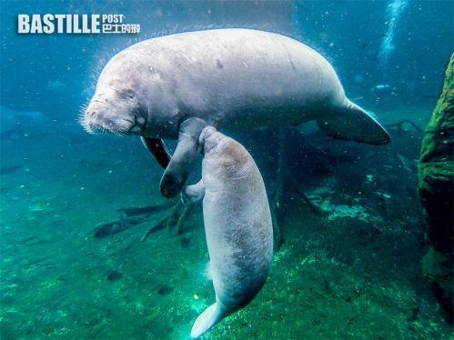 打卡橫琴長隆海洋王國,看遍珍貴海洋動物