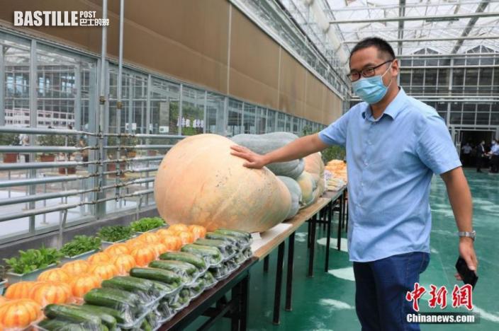圖為農產品亮相河南省主會場。中新社