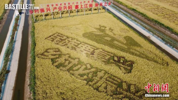 9月23日,航拍寧夏賀蘭縣創意稻田。當日是第四個中國農民豐收節,寧夏多地舉行慶祝農民豐收節活動(無人機照片)。圖:中新社
