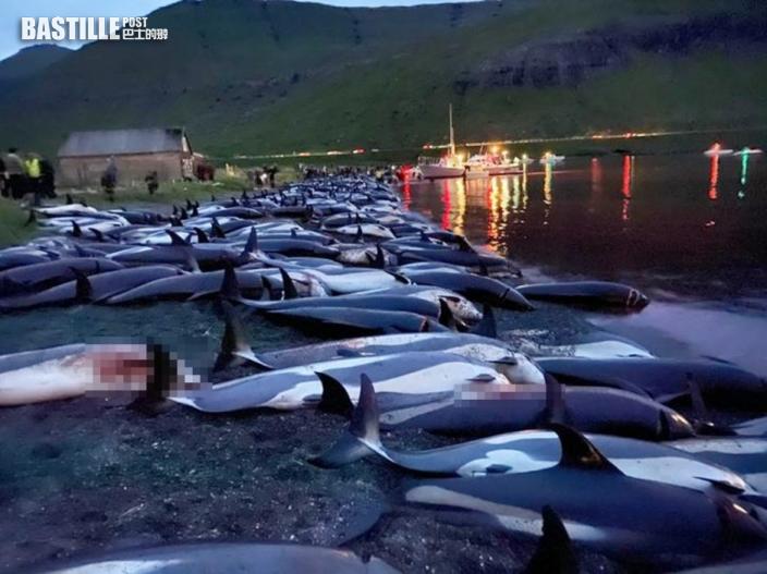捕獵季節開鑼法羅群島1400條海豚被殺 保育團體憤怒