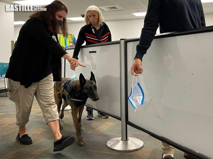 美國邁阿密機場搜索犬「聞出」新冠患者 稱準確率逾99%