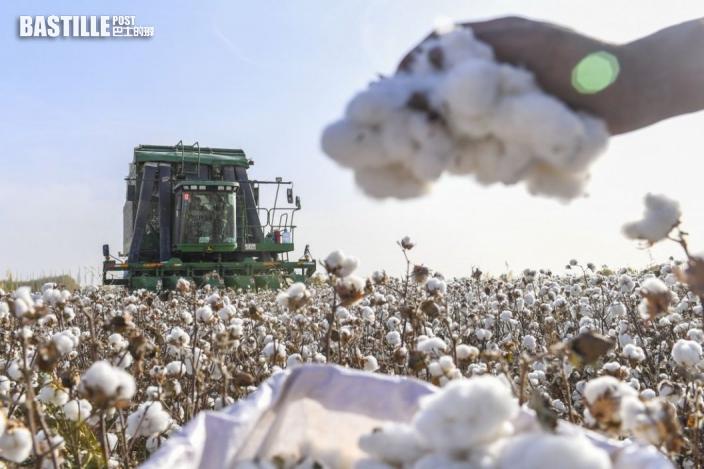 首批「中國可持續棉花」進入認證階段 料很快進入消費市場