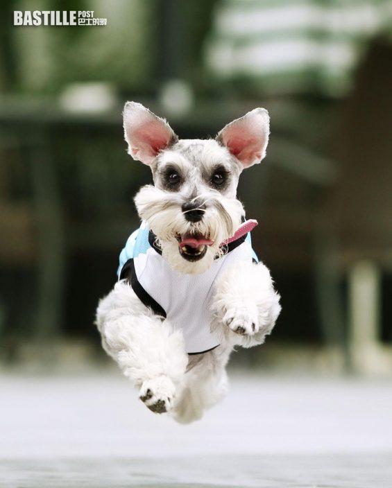 李松蔓18歲愛犬離世 感謝陪伴人生所有重要時刻