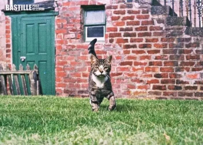 愛貓失散10年後重聚 給貓主一個熱情擁抱