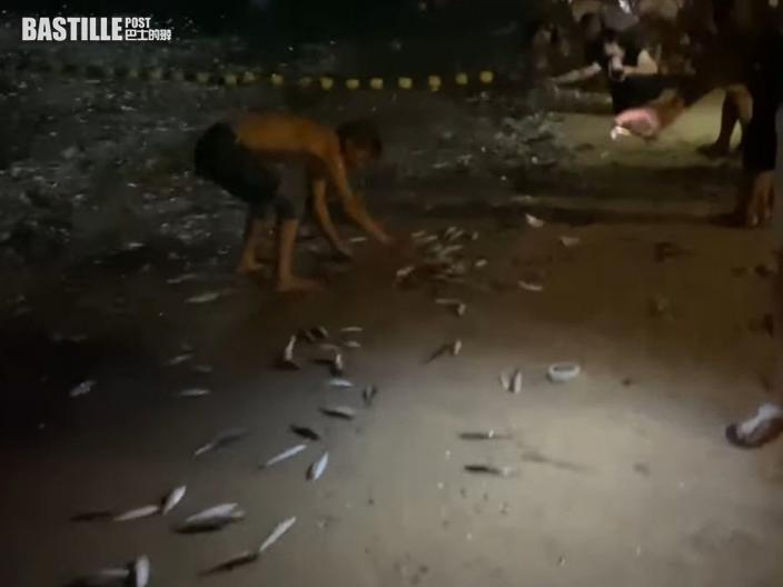 長洲中秋大群沙丁魚跳上岸 半百市民賞月兼執魚
