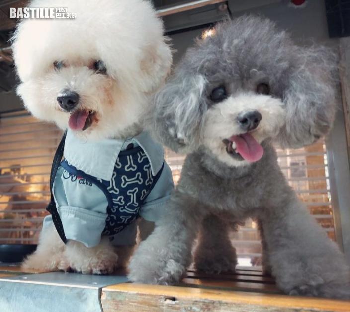 李施嬅貼素顏照賀兩愛犬16歲生日 網民讚人靚又有愛心