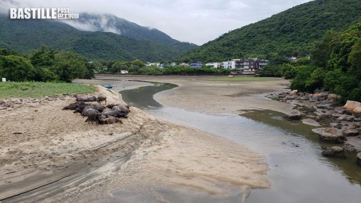 研究指6%沼澤地遭填平 環團批南大嶼山保育不合時宜