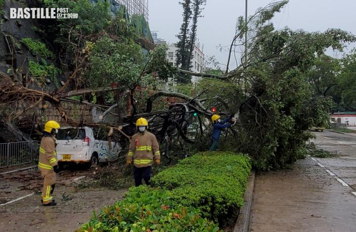 九龍塘又一村10米長樹椏塌下 壓中3私家車 無人傷
