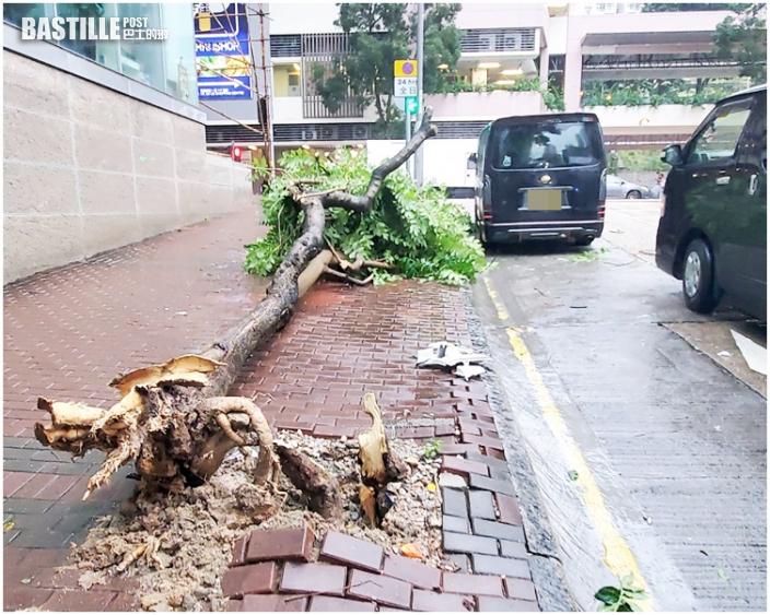 八號風球下半日近70宗塌樹 長沙灣4米樹壓毁私家車